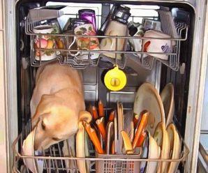 6 причин, зачем нужна посудомоечная машина